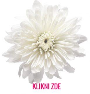 #provonime_cesko #interierove_vune #scent #scentmarketing #directmarketing #podporaprodeje #businesspassion #jakpřilákatzákazníky #aromadiffuzer #visualexpert_eu